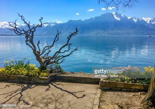 plants by lake against sky - vaud canton stock photos and pictures