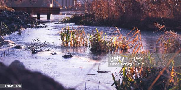 plants by river in forest - colbing stock pictures, royalty-free photos & images