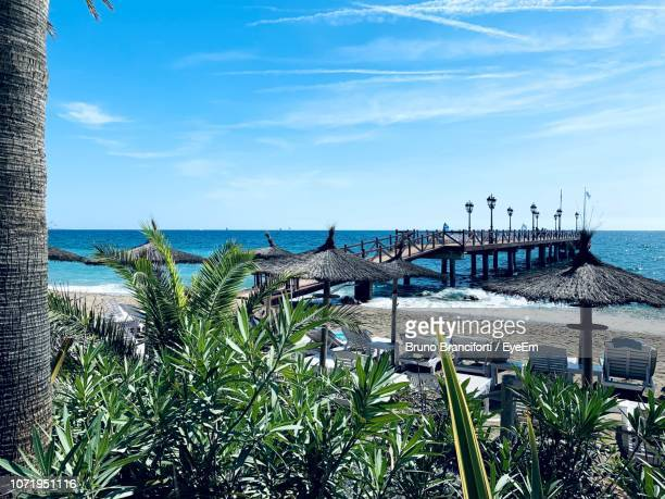 plants by sea against sky - marbella stock pictures, royalty-free photos & images