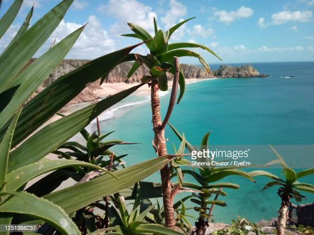plants by sea against sky - penzance stock pictures, royalty-free photos & images