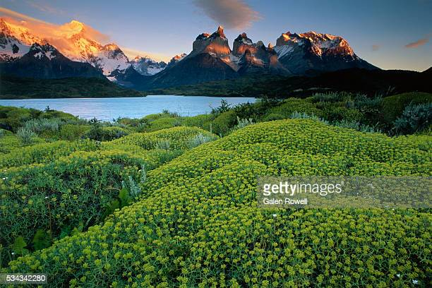 Plants Covering Ground Near Cuernos del Paine