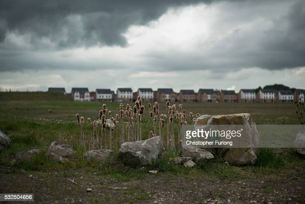 Plants grow at the reclaimed land of the former Orgreave Coking plant which has now been redeveloped for modern housing and the coking plant was the...