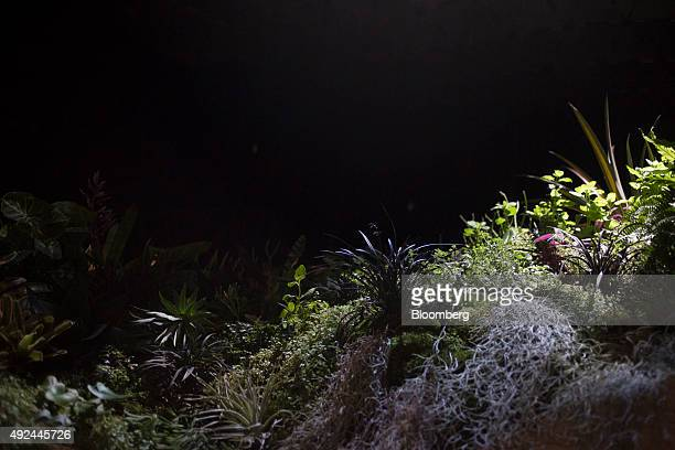 Plants grow inside the Lowline Lab in New York US on Monday Oct 12 2015 An underground park in New York City's Lower East Side complete with real...