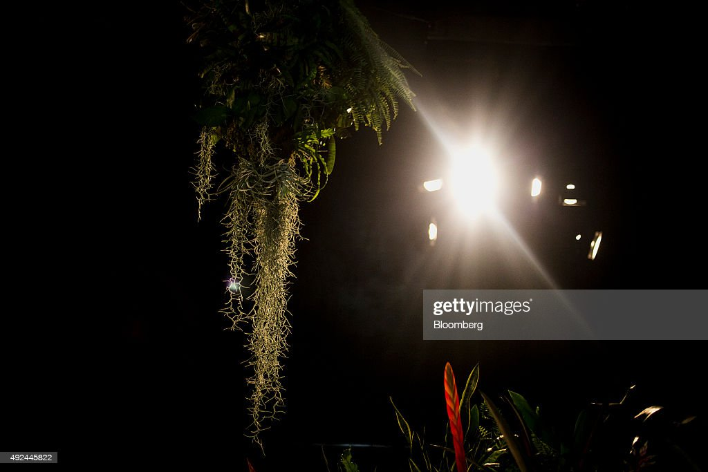 A Look Inside the Lowline, New York City's First Underground Park : News Photo