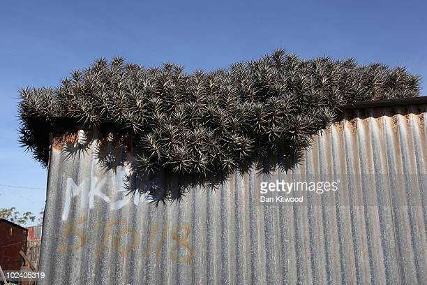 Plants grow on a tin roof in the New Brighton Township on June 24, 2010 in Port Elizabeth, South Africa. The New Brighton Township was established in...