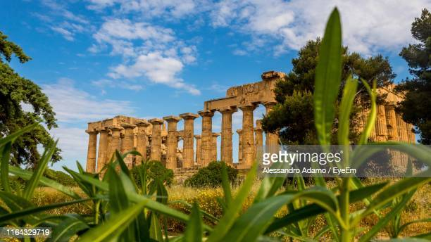 plants growing against old ruins - adamo photos et images de collection
