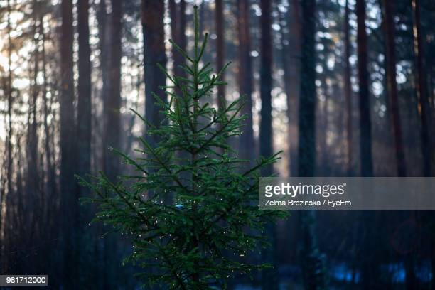 Plants Growing Against Trees In Forest