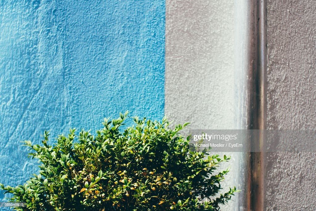Plants Growing Against Wall : Stock Photo