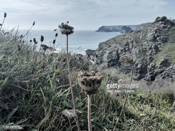 plants growing at beach against sky - tom mullion stock pictures, royalty-free photos & images