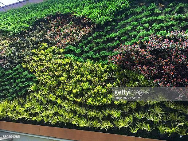 Plants Growing At Vertical Garden