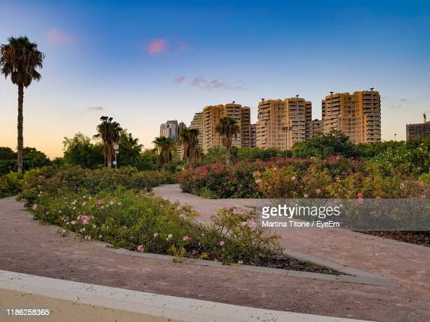 plants growing by building in city against sky - castellon de la plana stock pictures, royalty-free photos & images