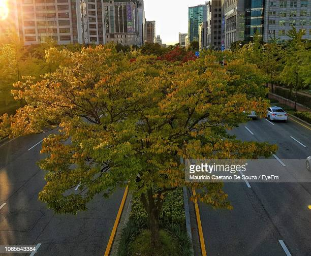 plants growing by building in city during autumn - mauricio caetano de souza stock photos and pictures