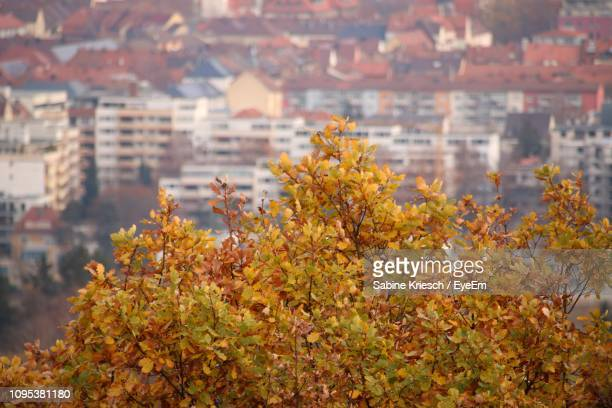 plants growing by buildings in city during autumn - sabine kriesch stock-fotos und bilder