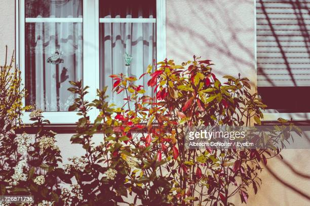 plants growing by house on sunny day - albrecht schlotter ストックフォトと画像