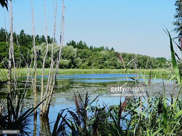 plants growing by lake against sky - oshawa stock photos and pictures