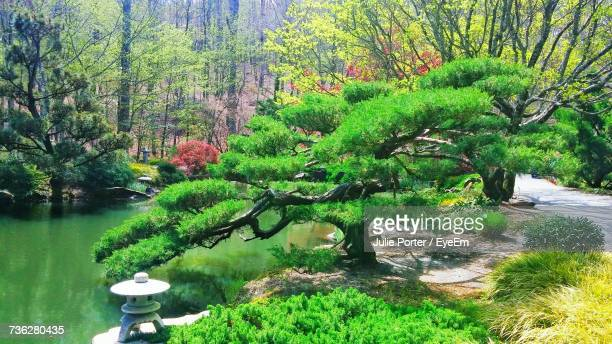 plants growing by river in forest - japanese garden stock photos and pictures