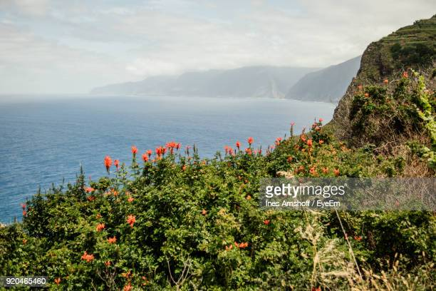 plants growing by sea against sky - ilha da madeira imagens e fotografias de stock
