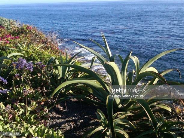 plants growing by sea - casey nolan stock pictures, royalty-free photos & images
