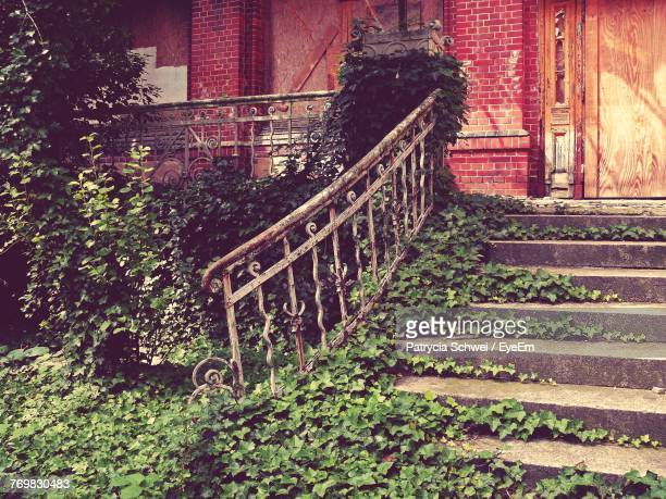 Plants Growing By Steps Against House