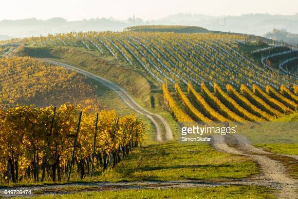plants growing in a row at vineyard - grape harvest stock pictures, royalty-free photos & images