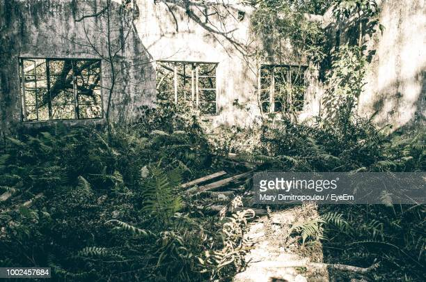 Plants Growing In Abandoned House