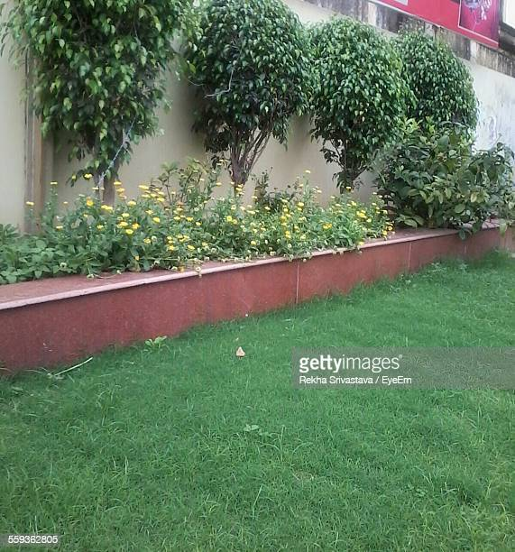 plants growing in backyard - rekha stock pictures, royalty-free photos & images