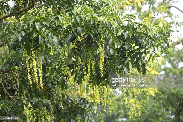 plants growing in farm - brezinska stock pictures, royalty-free photos & images