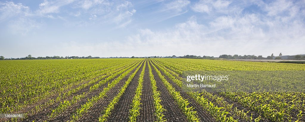 Plants growing in field : Stock Photo