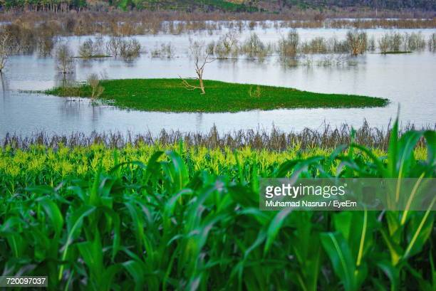 plants growing in field - muhamad nasrun stock pictures, royalty-free photos & images