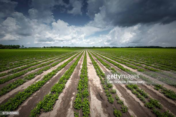 plants growing in field - florida landscaping stock pictures, royalty-free photos & images