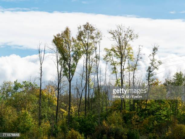 Plants Growing In Forest Against Sky