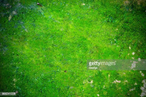 plants growing in forest, moss background - moss stock pictures, royalty-free photos & images