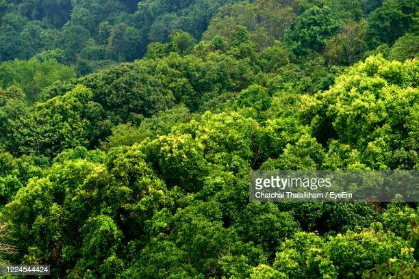 plants growing in forest - chatchai thalaikham stock pictures, royalty-free photos & images