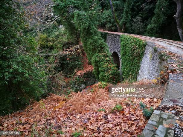plants growing in forest - volos stock pictures, royalty-free photos & images