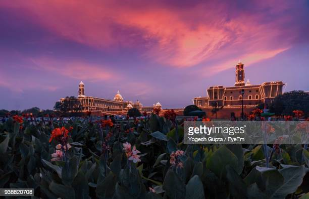 plants growing in front of illuminated rashtrapati bhavan during sunset - delhi stock pictures, royalty-free photos & images