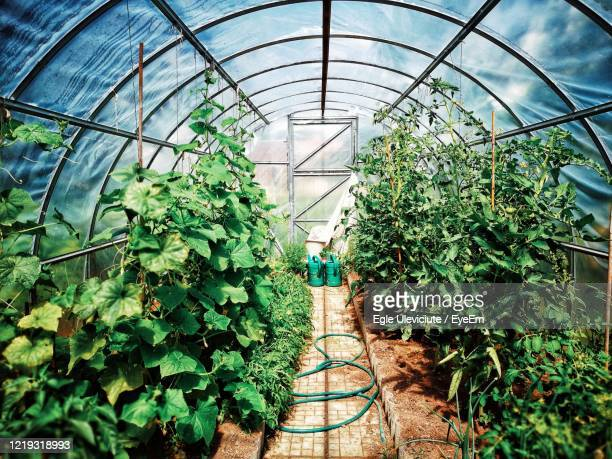 plants growing in greenhouse - physical structure stock pictures, royalty-free photos & images