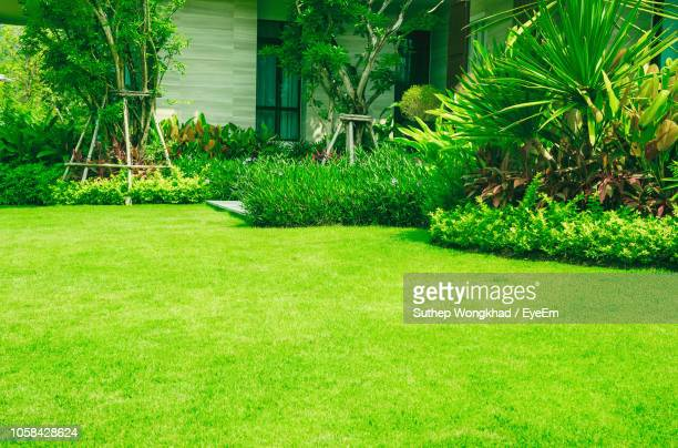 plants growing in lawn outside house - lawn stock pictures, royalty-free photos & images