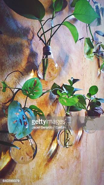Plants Growing In Light Bulb Against Wall