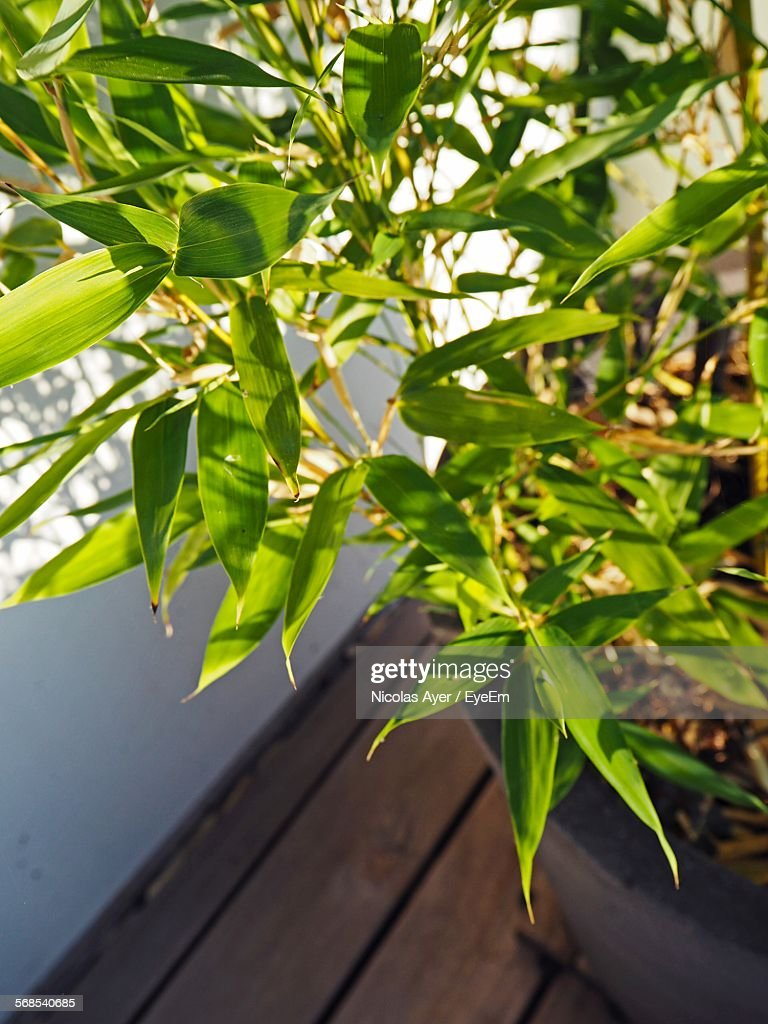 Plants Growing In Pot : Stock Photo