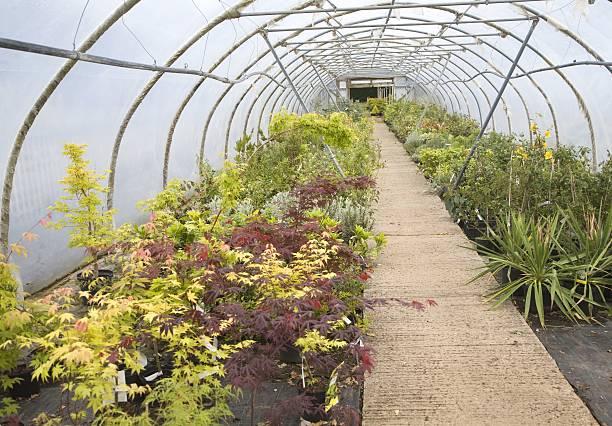 small polythene greenhouse