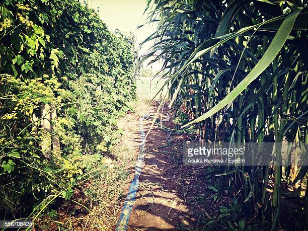 plants growing on agricultural field - asuka stock pictures, royalty-free photos & images
