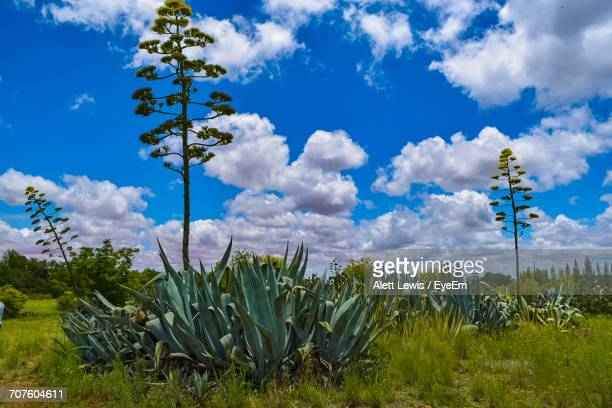 Plants Growing On Field Against Blue Sky