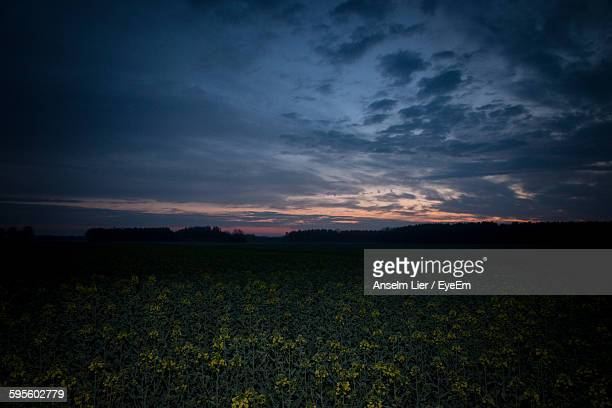 Plants Growing On Field Against Cloudy Sky At Dusk