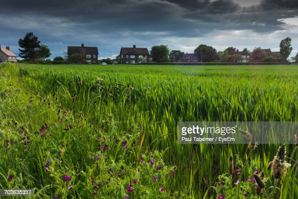 Plants Growing On Field Against Cloudy Sky