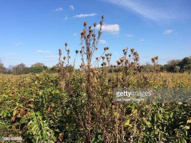 plants growing on field against sky - vogel stock pictures, royalty-free photos & images