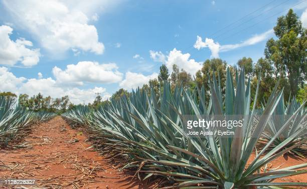 plants growing on field against sky - jose ayala stock pictures, royalty-free photos & images