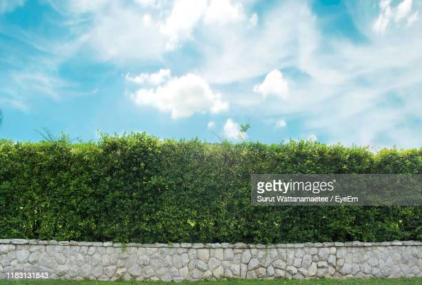 plants growing on field against sky - domestic garden stock pictures, royalty-free photos & images