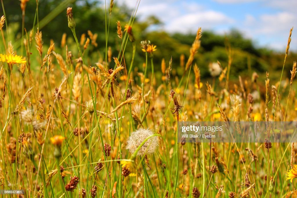 Plants Growing On Field Against Sky : Stock Photo