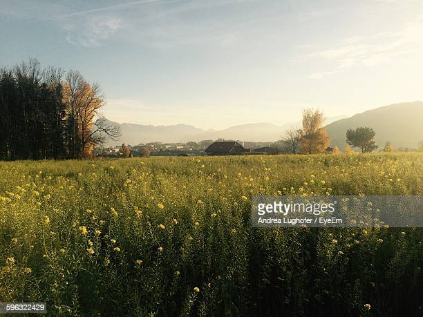 plants growing on field against sky - upper austria stock pictures, royalty-free photos & images
