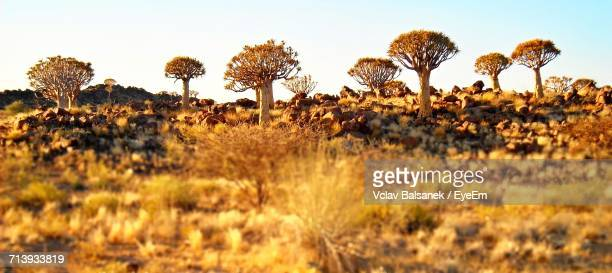 plants growing on field against sky - gauteng province stock pictures, royalty-free photos & images